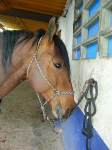 veterinario de caballos Toledo