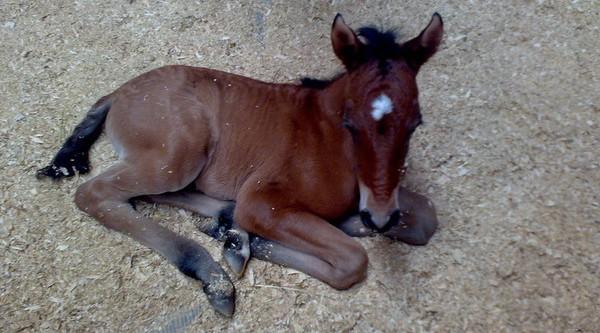Cuidados del recién nacido caballo