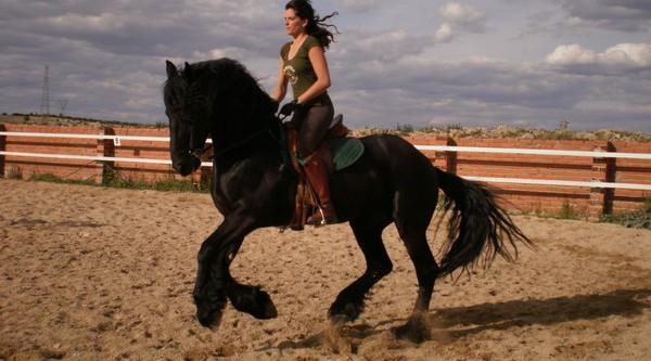 Pasos a seguir para comprar un caballo