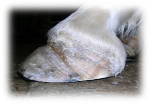Medicina deportiva caballo veterinario