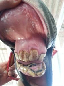 caso clínico boca caballo