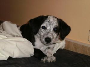 Adopción de perros veterinario Horsevet