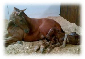 Reproducción y neonatología caballos - Veterinario