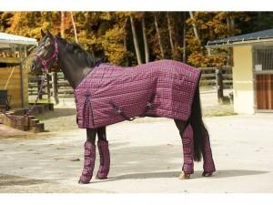 pasos-a-seguir-para-comprar-un-caballo